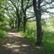 多摩川の支流、平井川の河畔道を散策してきました