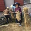 脱穀、籾すり作業