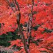 奥三河の紅葉