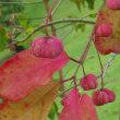 金沢城公園で確認された秋の七草はじめ、様々な花と実。