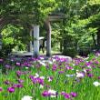 行田公園の花菖蒲が盛り・・・滑川市・行田(ぎょうでん)公園