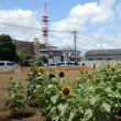 雲と塔とヒマワリの花