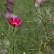 身近で目に付く花