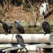 鶴見緑地 大池模様