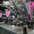 目黒の夜桜は