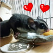 プチトマトソースのチキンソテー&ふくちゃんの大好きな☆