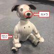 【アクアリーフのペット!今日のaibo】