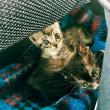 娘が東京と山口市まで新幹線往復で貰ってきた保護猫2匹✨