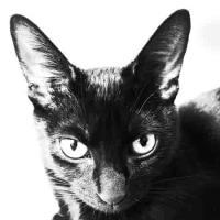 クロ猫の肖像