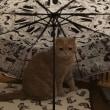 トシミの雨宿り。