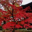 京都の秋 〜 真如堂の紅葉
