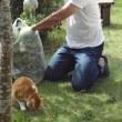 庭仕事とタマ