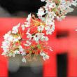 【話題】自殺未遂で1000年前の記憶がよみがえった日本人男性 / 前世で過ごした1000年前の京都のようすを報告 前世の記憶