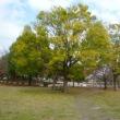 秋の手賀沼ガイド