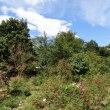 きょうの庭と那須