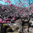 花の寺「海蔵寺」