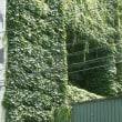 ビルの壁面緑化、洞窟の入口?