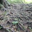 「県民の森」比婆山(1)