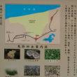 鳥取砂丘ナウ 11