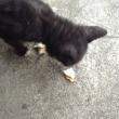 海辺でランチ〜黒猫さんとシャボン玉
