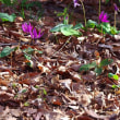 チャトラの春