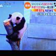 12/13 まもなくパンダがデビューする