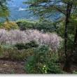 冬桜の季節Ⅳ