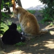 寄り添う猫(^^♪&つんつん文鳥。