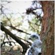 松の木-2