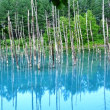 青い池と十勝岳!(6日目)