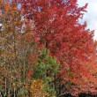 ハウステンボスの紅葉