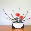 アカメ柳と大きなバラ・・自由花