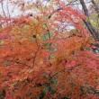 小宮公園の紅葉