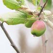 初冬の果実