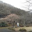 マイツリー新規募集&冬に桜を見に行く??