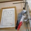 金太郎とふーちゃんの日記 10,4~10,10