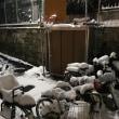 数年ぶりの大雪。船橋も大変だ‼️