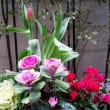 今日の我が家の植物