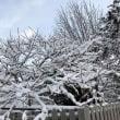 我家の樹氷