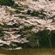 桜ゴルフ⛳️ 2018