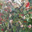 3月庭の花々