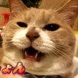 お母ちゃんのクシャミに反応する♂猫だいず【猫日記こむぎ&だいず】2018 06 19