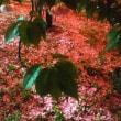 灯篭に花びらの絨毯