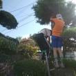 🎵 帰省するや、 休む間もなく息子兄弟と、 孫が競うよ松の木を伐採!