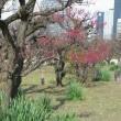 春を訪ねて