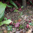 庭に生える幼木