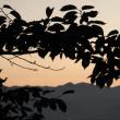 弘法山より常念岳