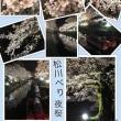 桜・サクラ…