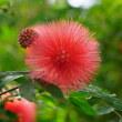 神代植物公園の大温室の花々たち その1
