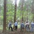 原木伐採のお知らせ(至急)